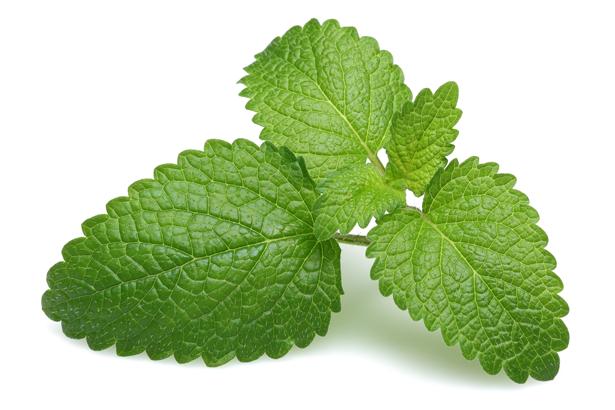 Lemon Balm Leaf and L-Tryptophan